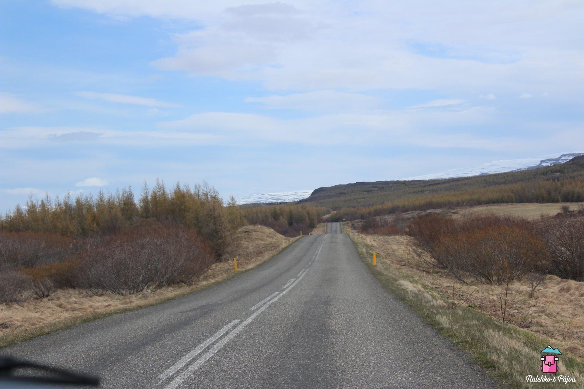 Jediný islandský les