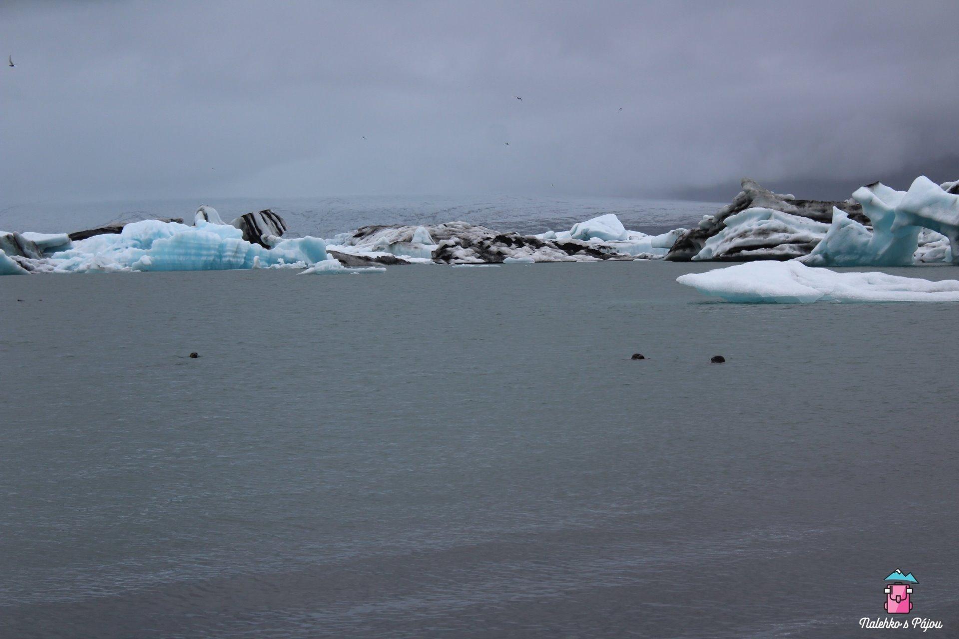 To úplně vzadu je ledovec, ze kterého se odlamují kry. A ty černé tečky jsou lachtani